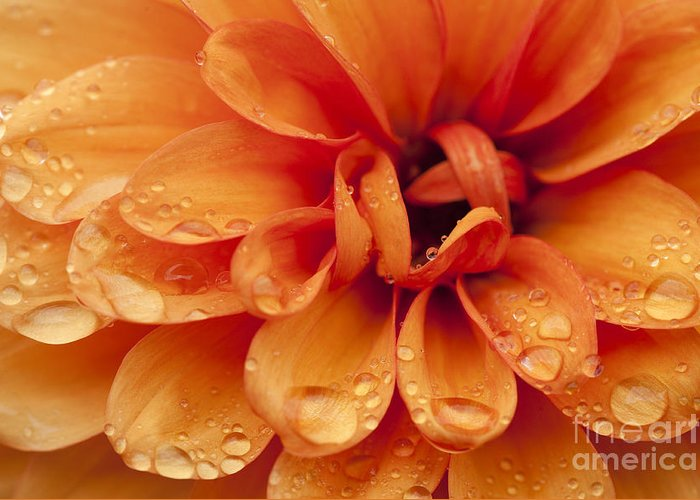 Abstract Greeting Card featuring the photograph After The Rain by Anne Gilbert