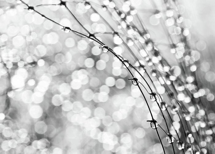 Macro Greeting Card featuring the photograph After The Rain by Theresa Tahara