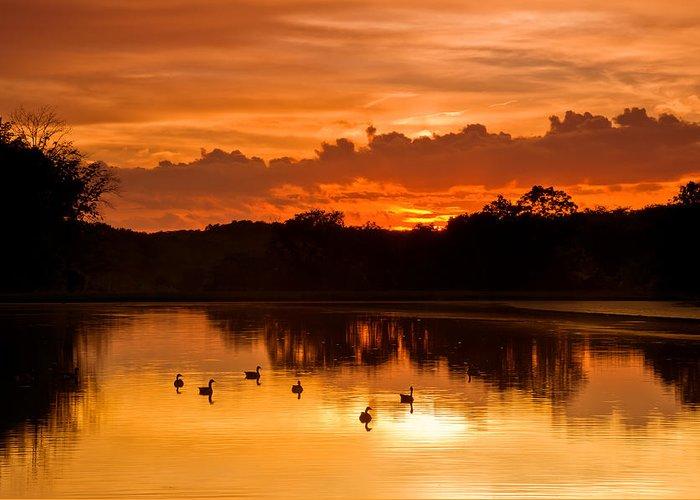 Ducks Lakes Greeting Cards