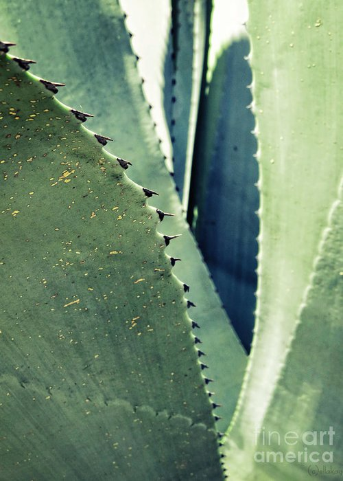 Agave Abstract Greeting Card featuring the photograph Agave Abstract by Ella Kaye Dickey