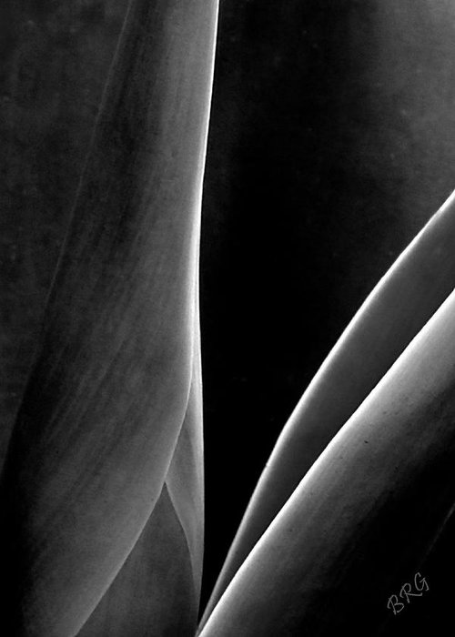 Agave Abstract Greeting Card featuring the photograph Agave by Ben and Raisa Gertsberg