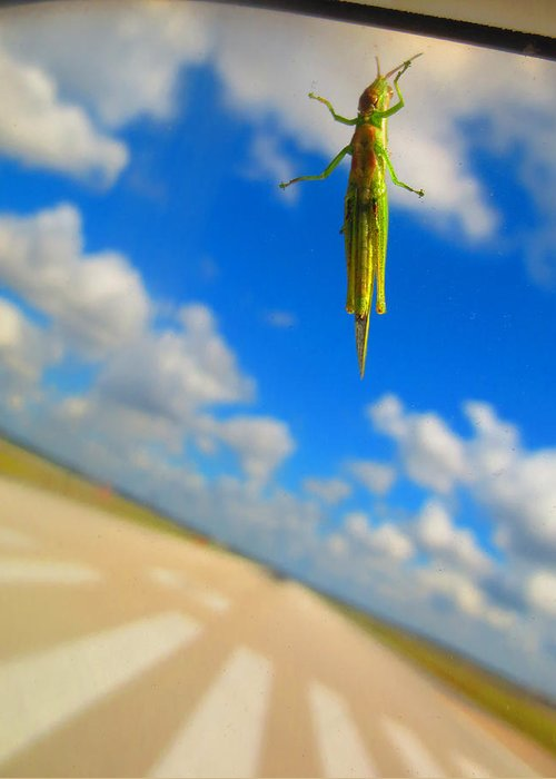 Grasshopper Greeting Card featuring the photograph Airplane Hitchhiker by Penny Parrish