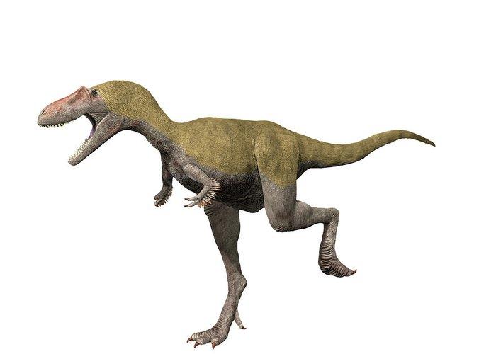 Albertosaurus Greeting Cards
