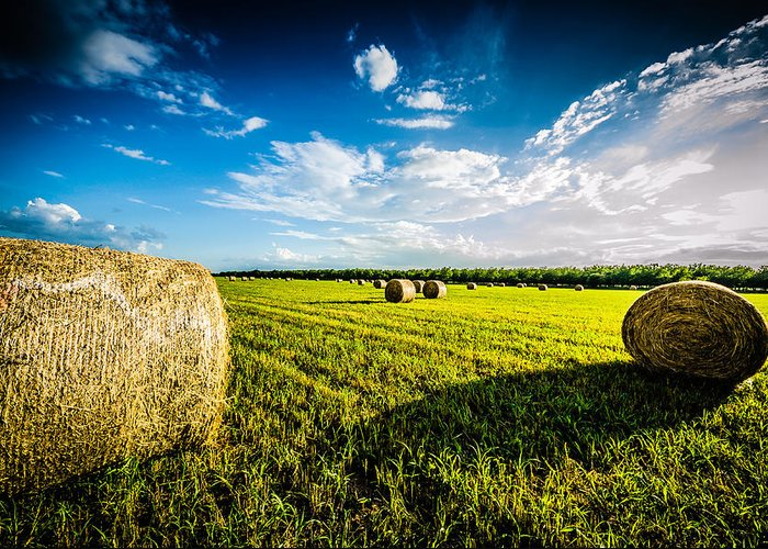 Hay Greeting Card featuring the photograph All American Hay Bales by David Morefield