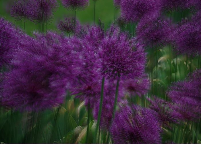 Allium Greeting Card featuring the photograph Allium Double Exposure by Ken Dietz