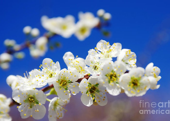 Abstract Greeting Card featuring the photograph Almond Blossom by Carlos Caetano