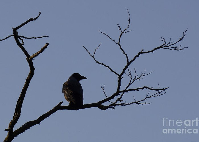 Crow Greeting Card featuring the photograph Alone by Inge Riis McDonald