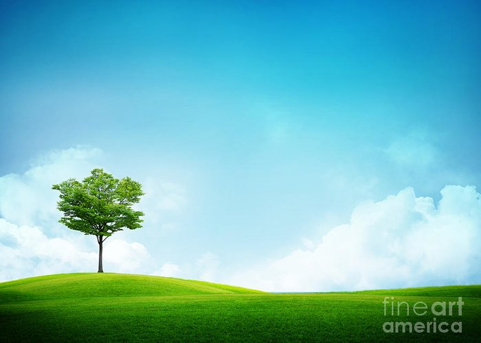 Alone Greeting Card featuring the photograph Alone Tree by Boon Mee