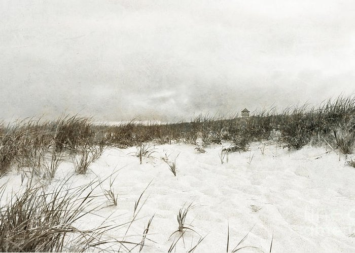 Along The Cape Cod National Seashore Greeting Card featuring the photograph Along The Cape Cod National Seashore by Michelle Wiarda