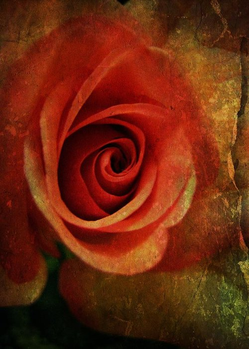 Rose Greeting Card featuring the photograph Always Be My Dream by Shirley Sirois