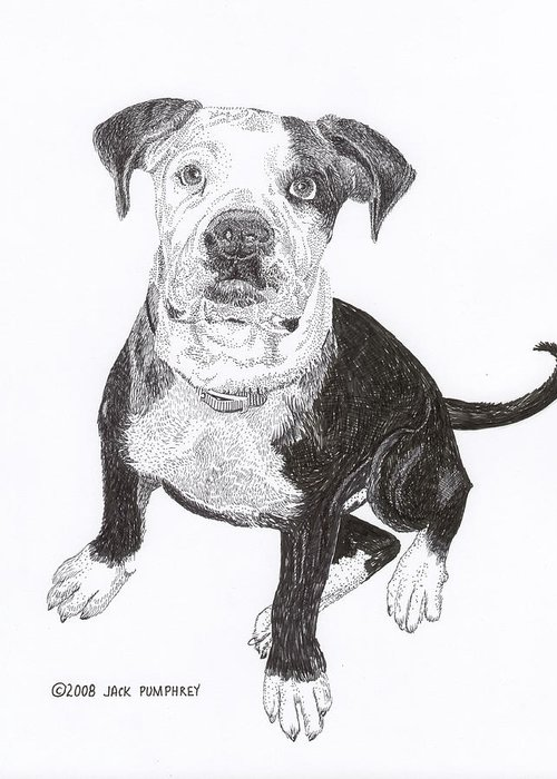 Bull Dog Puppies Greeting Card featuring the drawing American Bull Dog As A Pup by Jack Pumphrey