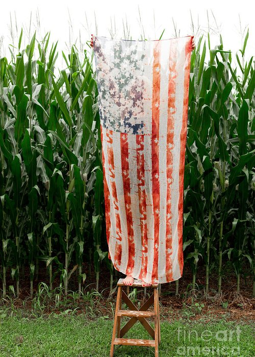 American Flag Greeting Card featuring the photograph American Flag And A Field Of Corn by Kim Fearheiley