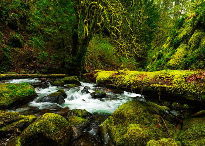 Northwest Greeting Card featuring the photograph American Jungle by Chad Dutson