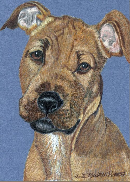 Dog Greeting Card featuring the painting American Pit Bull Terrier Puppy by Anita Putman