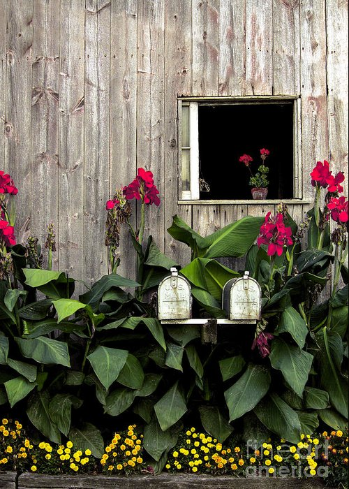 Barn Greeting Card featuring the photograph Amish Barn by Diane Diederich