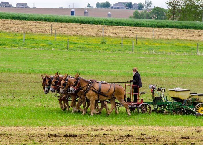Guy Whiteley Photography Greeting Card featuring the photograph Amish Farmer by Guy Whiteley
