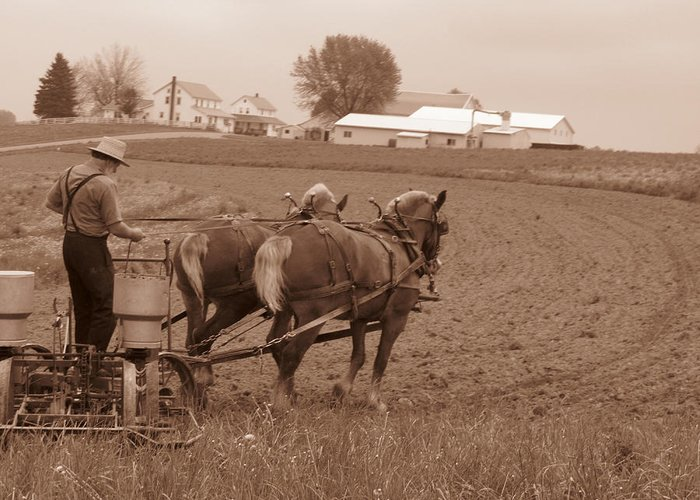 Amish Life Greeting Card featuring the photograph Amish Farmer by Janet Pugh
