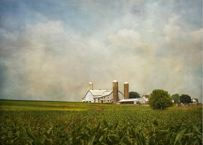 Rural Greeting Card featuring the photograph Amish Farmland by Kim Hojnacki