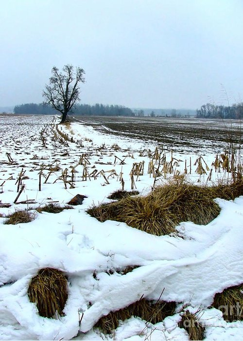 Amish Greeting Card featuring the photograph Amish Field In Winter by Julie Dant