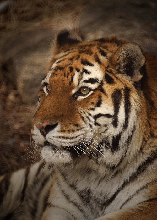 Tiger Greeting Card featuring the photograph Amur Tiger 2 by Ernie Echols