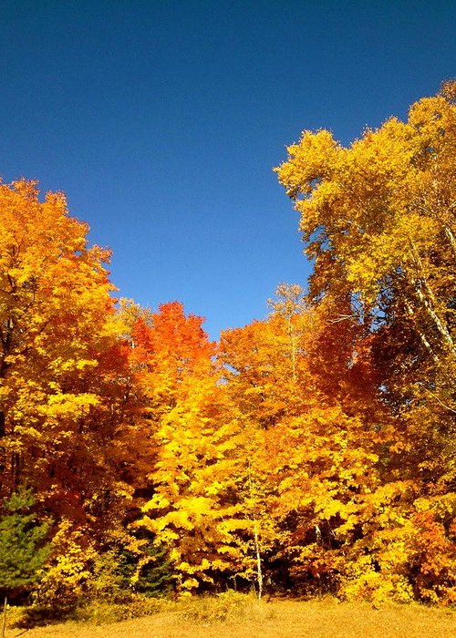 Minnesota Greeting Card featuring the photograph An Autumn Of Gold by Danielle Broussard
