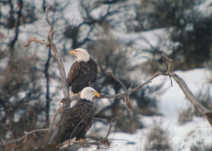 Eagles Greeting Card featuring the photograph An Eagle Pair by Jeff Swan