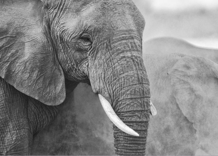 Sand Greeting Card featuring the photograph An Elephant Never Forgets by Paul W Sharpe Aka Wizard of Wonders