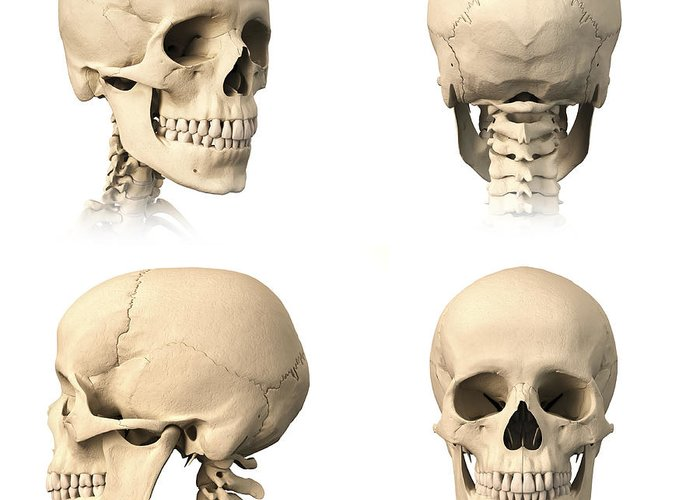 Anatomy Of Human Skull From Different Greeting Card For Sale By