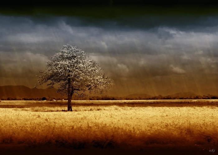 Landscapes Greeting Card featuring the photograph And The Rains Came by Holly Kempe