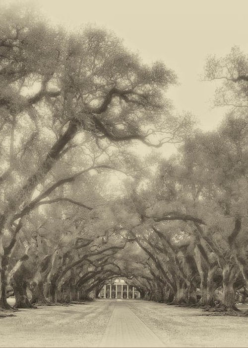Oak Alley Plantation Greeting Card featuring the photograph And Time Stood Still Sepia by Steve Harrington