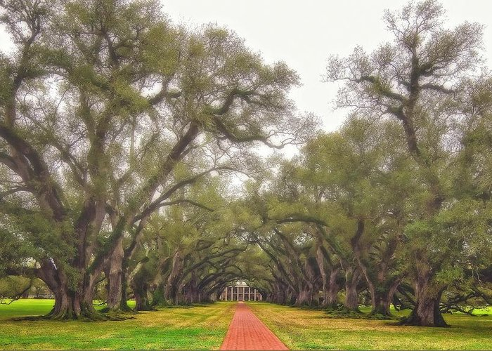 Oak Alley Plantation Greeting Card featuring the photograph And Time Stood Still by Steve Harrington