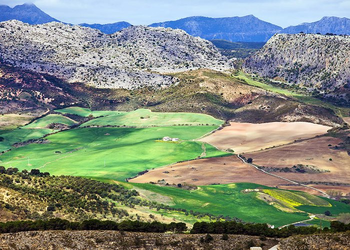 Agriculture Greeting Card featuring the photograph Andalucia Landscape In Spain by Artur Bogacki