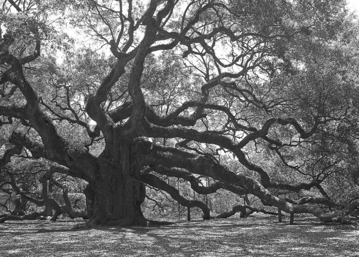 Black And White Greeting Card featuring the photograph Angel Oak II - Black And White by Suzanne Gaff