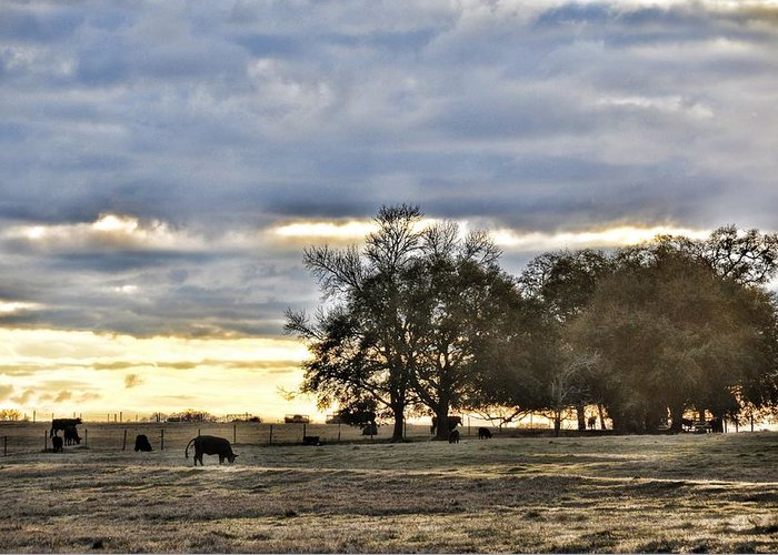 Landscapes Greeting Card featuring the photograph Angus Evening by Jan Amiss Photography