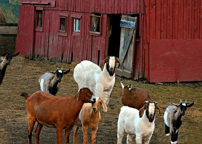 Barn Greeting Card featuring the photograph Animal House by Diana Angstadt