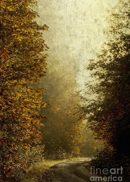 Fall Color Greeting Card featuring the photograph Another Road Travelled by Belinda Greb