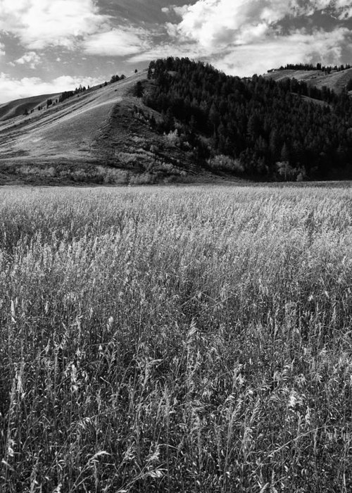 Black And White Greeting Card featuring the photograph Antelope Flats by Frank Burhenn