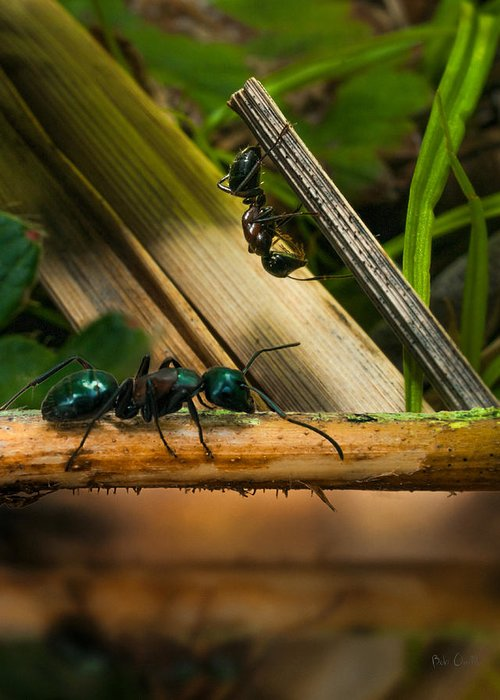 Ant Greeting Card featuring the photograph Ants Adventure 2 by Bob Orsillo