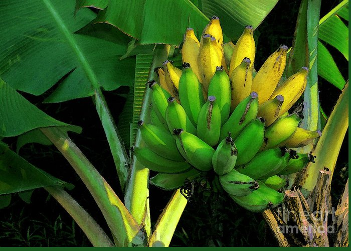 Apple Banana Greeting Card featuring the photograph Apple Banana by James Temple