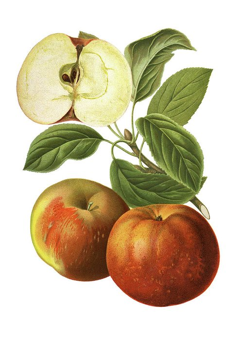 Art Greeting Card featuring the digital art Apples by Ivan-96