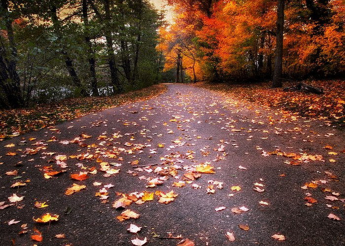 Autumn Greeting Card featuring the photograph Approaching Autumn by Jessica Jenney