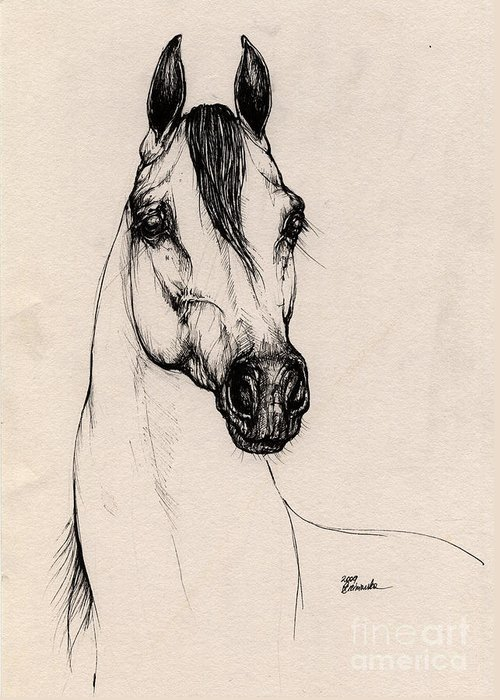 Arabian Horse Greeting Card featuring the drawing Arabian Horse Drawing 29 by Angel Ciesniarska