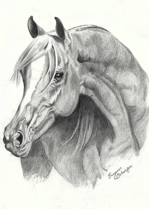 Drawing Of A Horse Greeting Cards
