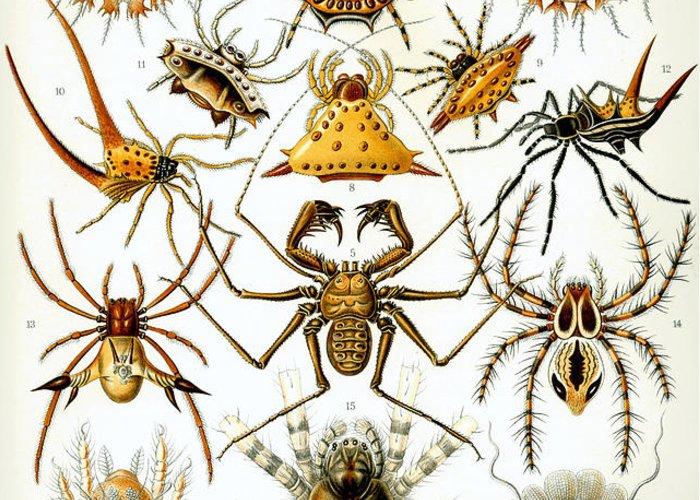 Arachnida Greeting Card featuring the digital art Arachnida by Georgia Fowler