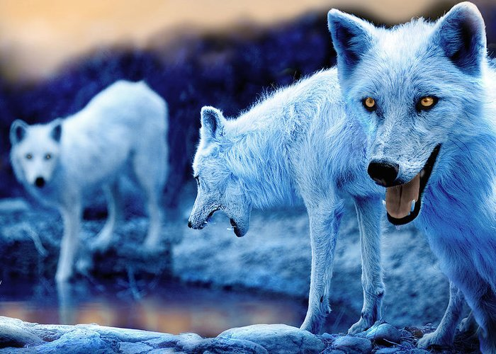 Canis Lupus Greeting Cards