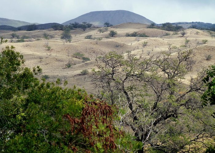 Hills Greeting Card featuring the photograph Arid Hills Of Kohala by Lori Seaman