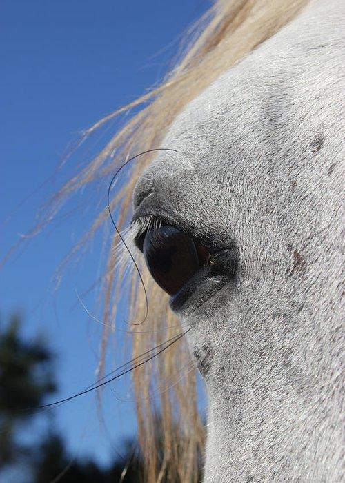 Horse Greeting Card featuring the photograph Arinya Eye by M Kathleen Warren