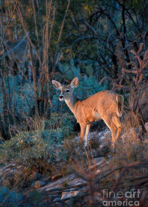 Arizona Greeting Card featuring the photograph Arizona Deer Sunset by Henry Kowalski