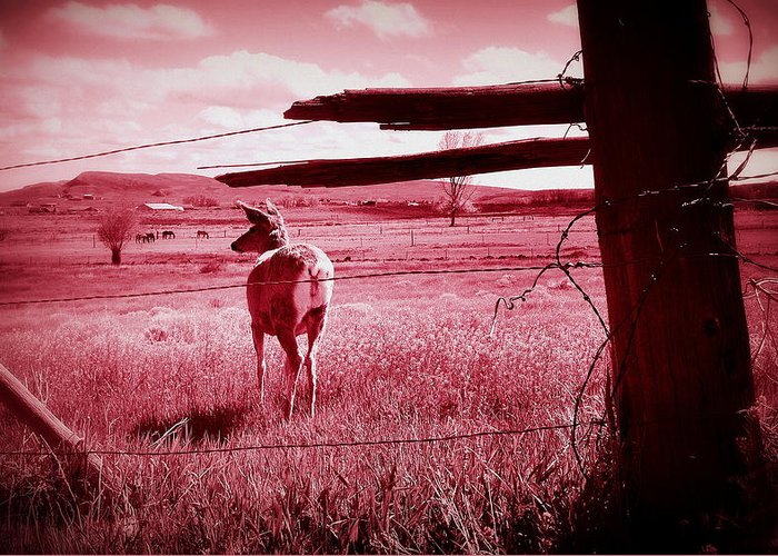 Countryside Greeting Card featuring the photograph As Bambi Sees It by Lisa Holland-Gillem