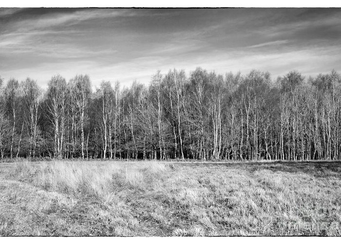 Ashdown Forest Greeting Card featuring the photograph Ashdown Forest Trees In A Row by Natalie Kinnear